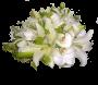 Bouquet Noiva Pérola