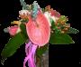 Pantera côr de rosa