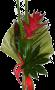 Exótico com Elicónia Vermelha