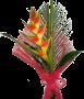 Exótico com Elicónia Bicolor